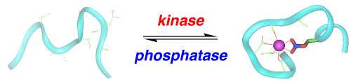 Protein Phsophorylation