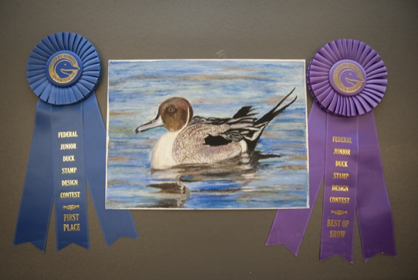 Winner Of Delawares 2016 Junior Duck Stamp Competition Announced