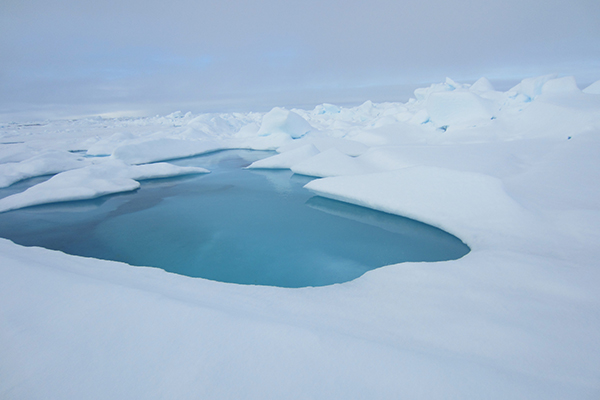 UD camera system records sea ice, identifies ideal walrus ...